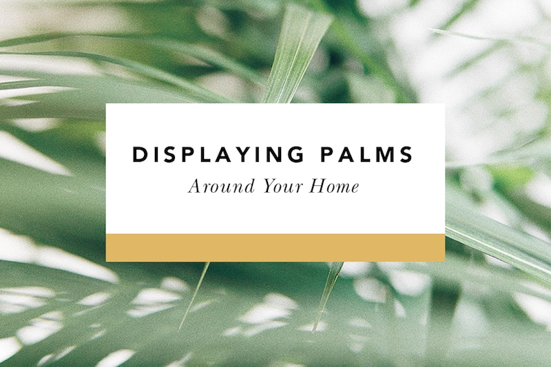 what to do with palms from palm sunday